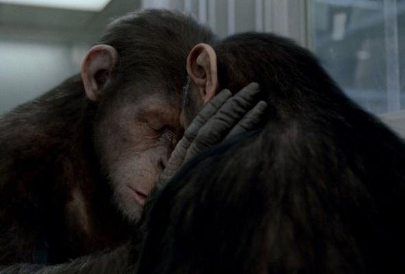 Восстание планеты обезьян - Фото №6