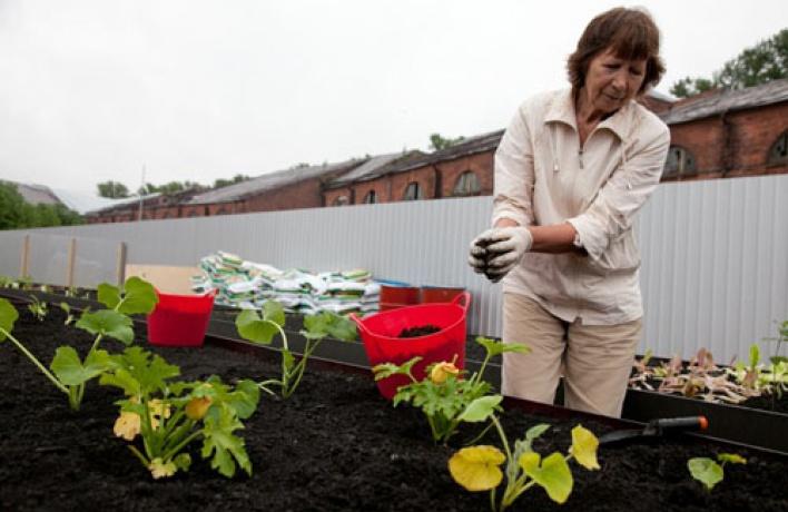 «Лавка.Петербург» завела первый городской общественный огород