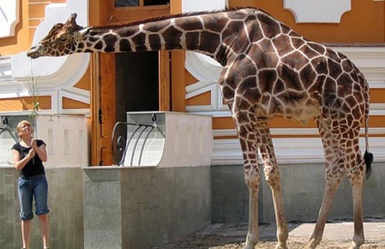 Зоопарк приглашает надень рождения Самсона Гамлетовича Ленинградова