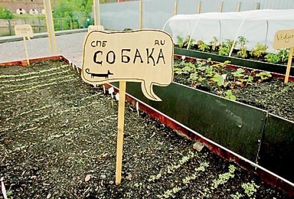 Лавка.Огород - Фото №2