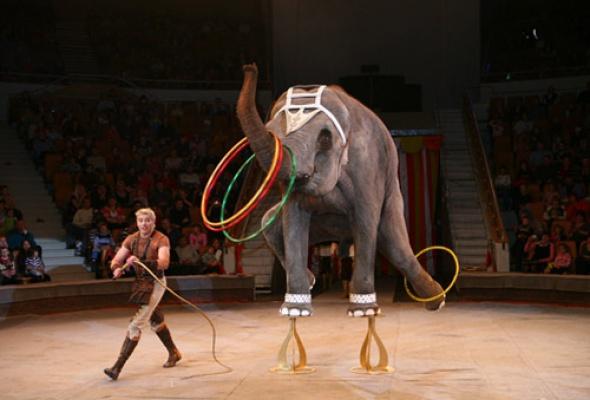 Цирк на Фонтанке - Фото №6