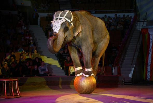 Цирк на Фонтанке - Фото №7