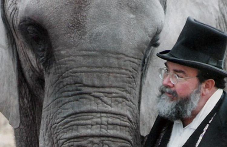 Счастливая слониха