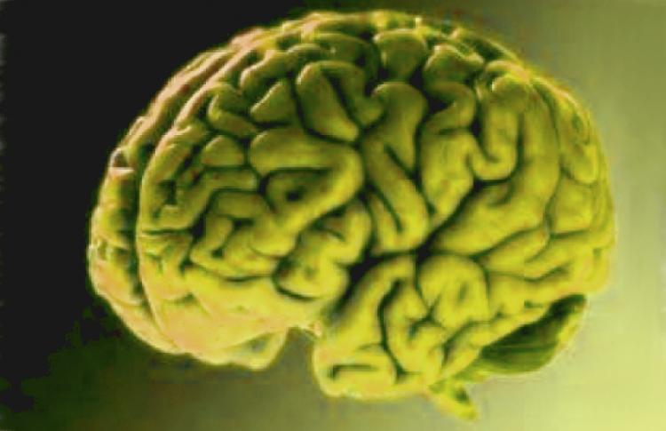 Как устроена память человека?