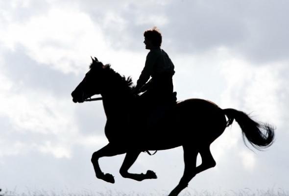 Боевой конь - Фото №2