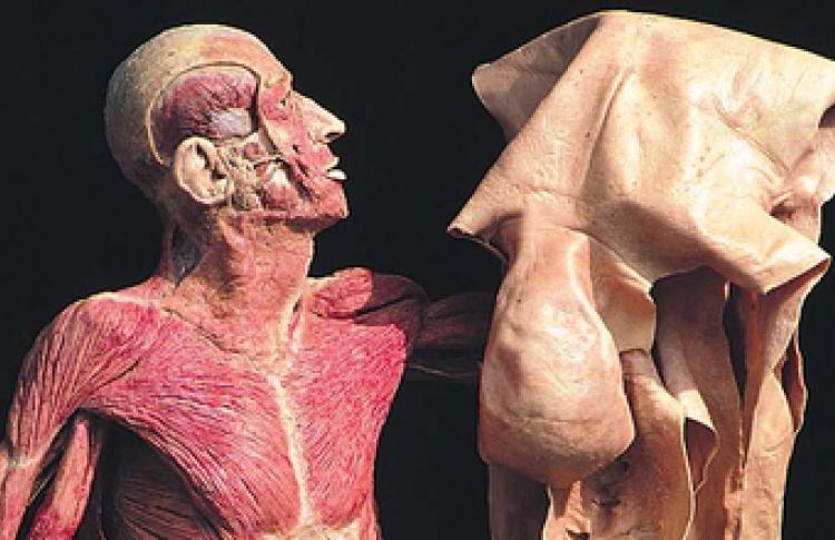 """""""The Human Body: Увидеть, чтобы понять"""""""