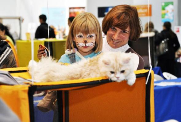В«Крокус Экспо» приехали самые красивые иредкие кошки - Фото №2