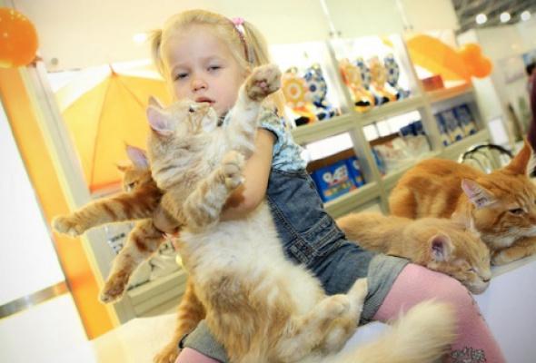 В«Крокус Экспо» приехали самые красивые иредкие кошки - Фото №3