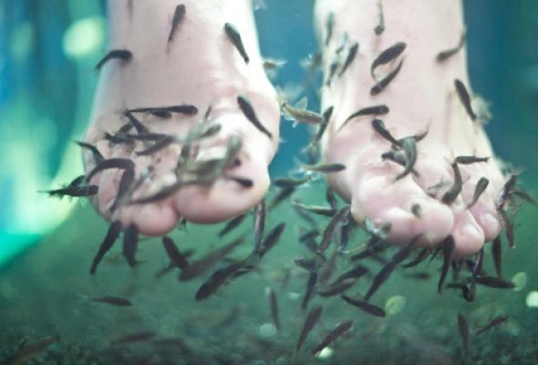Где сделать маникюр при помощи рыб? - Фото №2