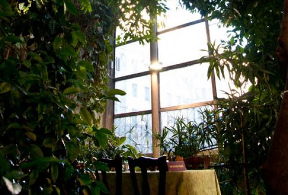 Зимний сад - Фото №0