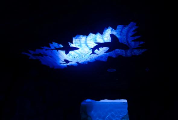 Океанариум - Фото №4