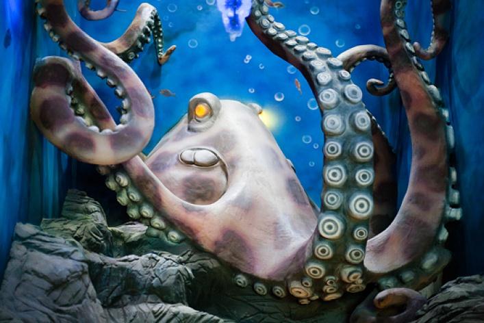 Новый океанариум: фоторепортаж