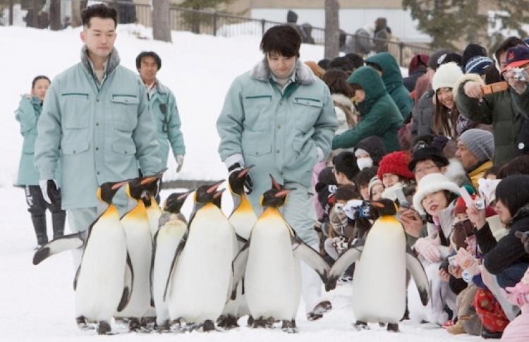 Зooпapк Acaхиямa: Пингвины в нeбe