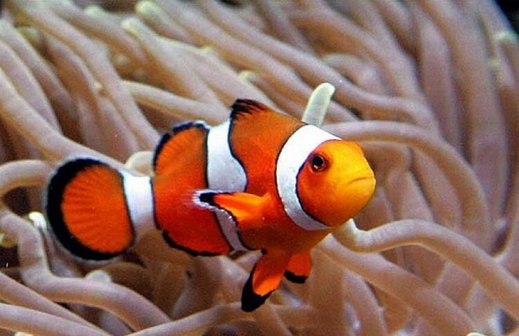 Самые странные живые существа на Земле