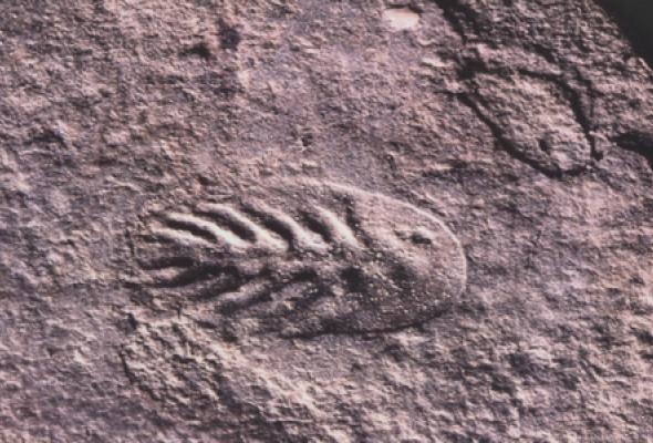 По следам древнейших существ - Фото №1
