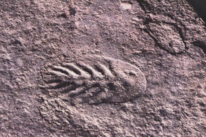 По следам древнейших существ