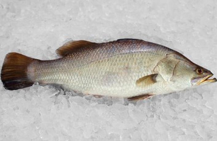 Свежая рыба в«Мансарде»