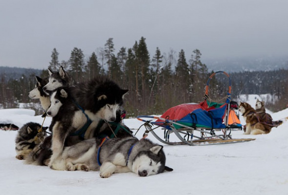 Полярная экспедиция: испытание севером - Фото №3