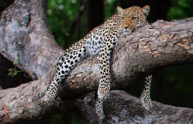 Живая природа Ботсваны