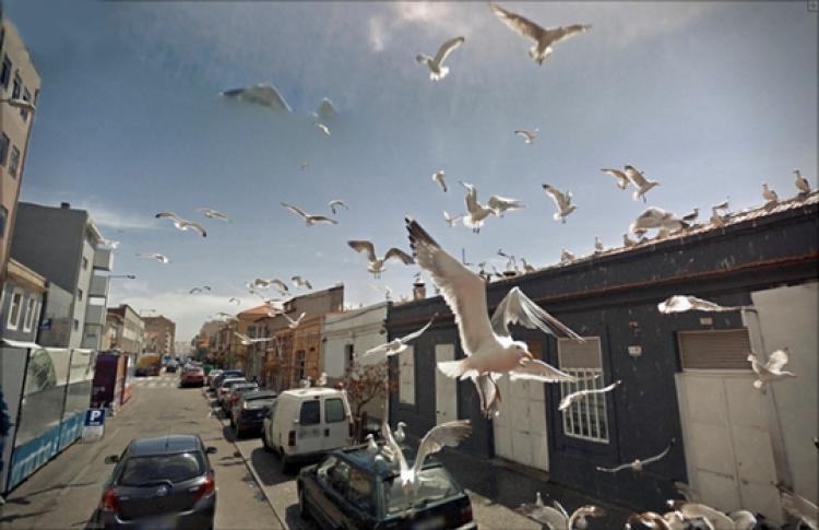 Джон Рафман «9 глаз Google street view»