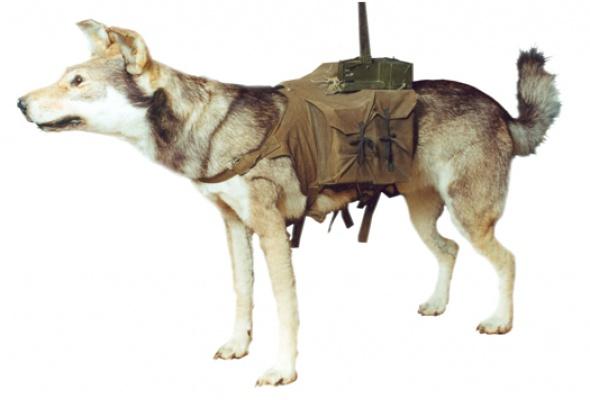 Животные на войне - Фото №0