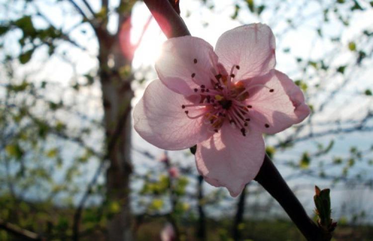 Цветы исуши сдоставкой в«Васаби»