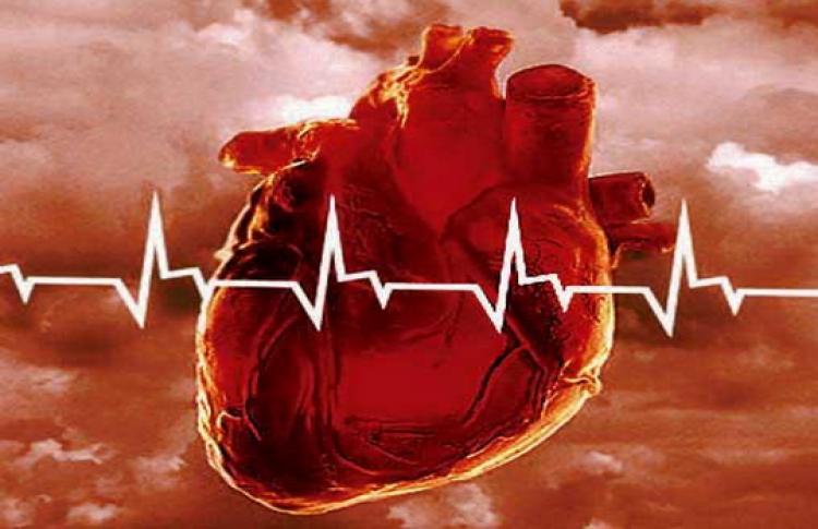Внимание, сердечный ритм и восприятие сердца