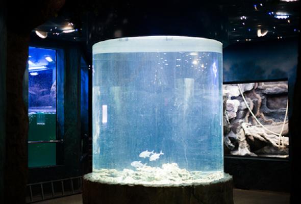 Океанариум - Фото №9