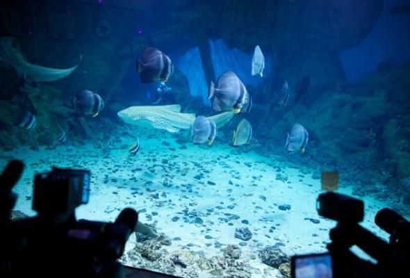 Дайв-шоу сакулами вокеанариуме: фотоотчет - Фото №2