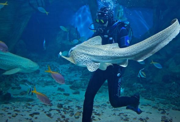 Дайв-шоу сакулами вокеанариуме: фотоотчет - Фото №3