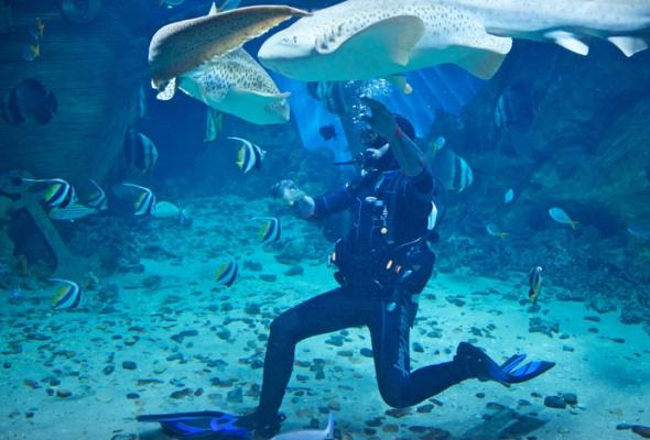 Дайв-шоу сакулами вокеанариуме: фотоотчет - Фото №4