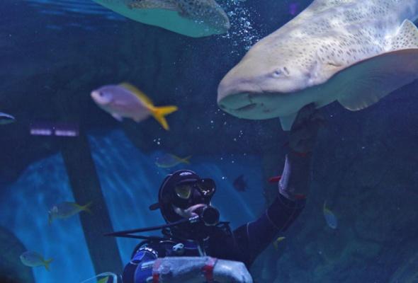 Дайв-шоу сакулами вокеанариуме: фотоотчет - Фото №5