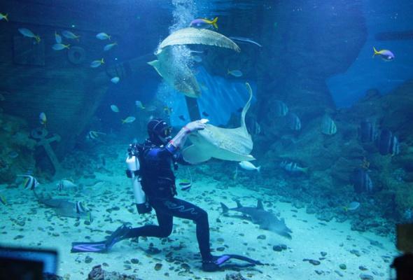 Дайв-шоу сакулами вокеанариуме: фотоотчет - Фото №6