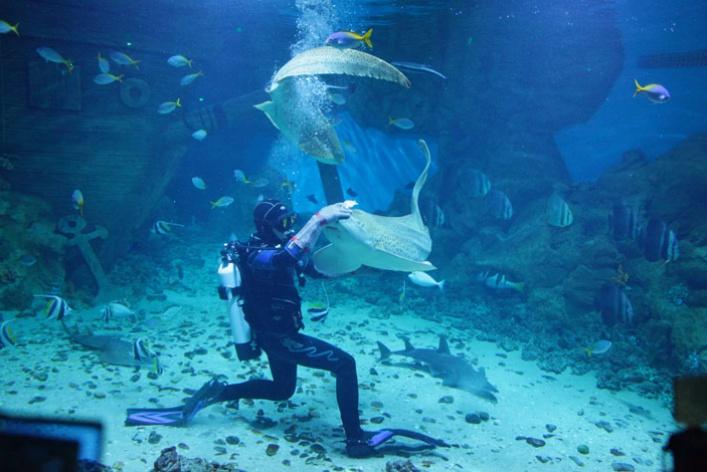 Дайв-шоу сакулами вокеанариуме: фотоотчет
