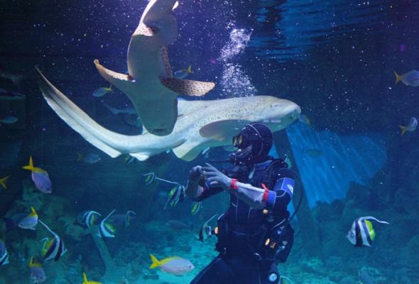 Дайв-шоу сакулами вокеанариуме: фотоотчет - Фото №7