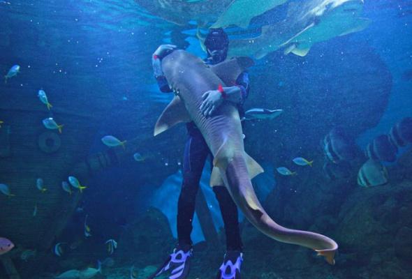 Дайв-шоу сакулами вокеанариуме: фотоотчет - Фото №0