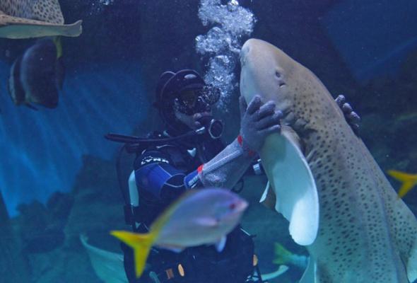 Дайв-шоу сакулами вокеанариуме: фотоотчет - Фото №8
