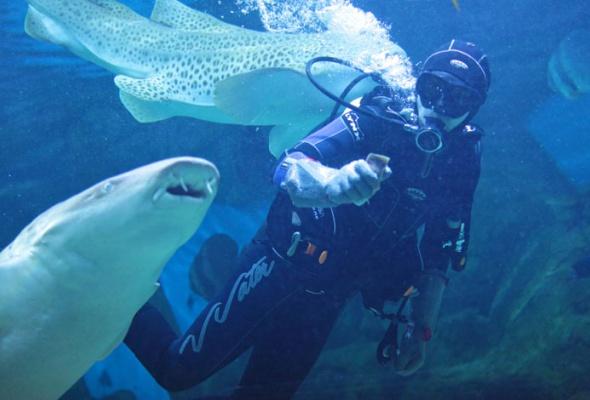 Дайв-шоу сакулами вокеанариуме: фотоотчет - Фото №1