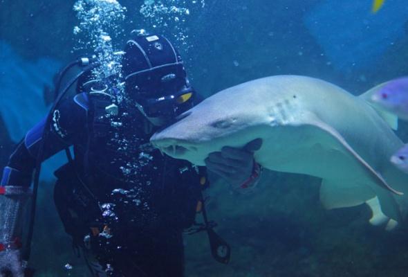 Дайв-шоу сакулами вокеанариуме: фотоотчет - Фото №9