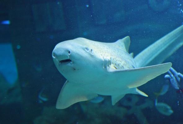 Дайв-шоу сакулами вокеанариуме: фотоотчет - Фото №10