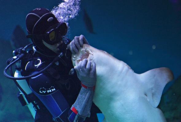 Дайв-шоу сакулами вокеанариуме: фотоотчет - Фото №11