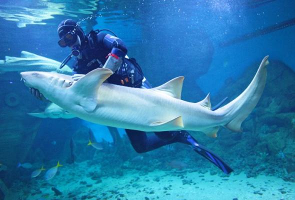Дайв-шоу сакулами вокеанариуме: фотоотчет - Фото №12