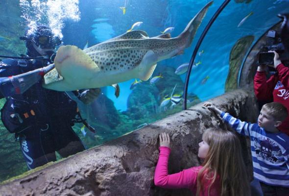 Дайв-шоу сакулами вокеанариуме: фотоотчет - Фото №14