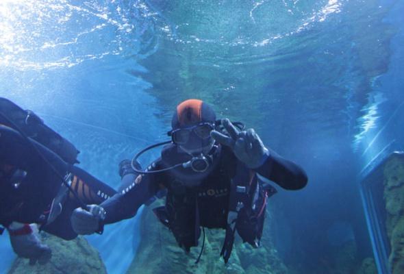 Дайв-шоу сакулами вокеанариуме: фотоотчет - Фото №13