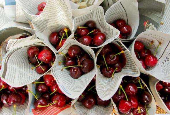 Посадка черешневого леса - Фото №0