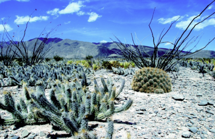 Взгляд на Мексику. Сокровища природы