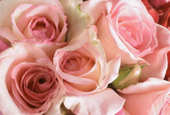 Город украсят 100 000 роз - Фото №5