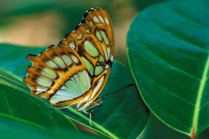 В«Сокольниках» появился сад тропических бабочек