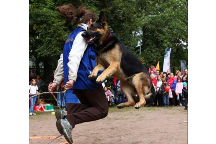 III Фестиваль любительской цирковой, трюковой и сценической дрессировки собак