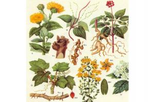 Ботанический сад. Лето